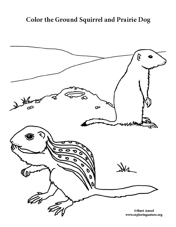 Ground Squirrel and Prairie Dog Coloring Page
