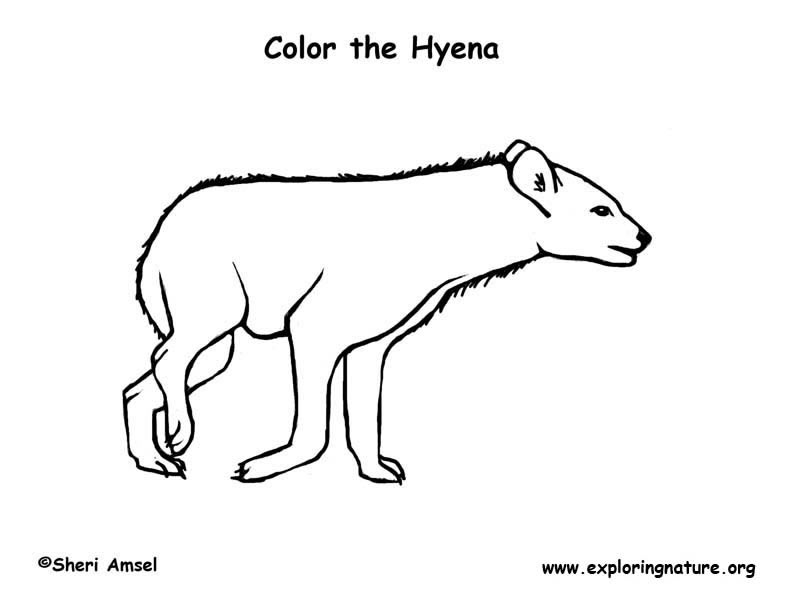 Hyena (Spotted) Coloring Page