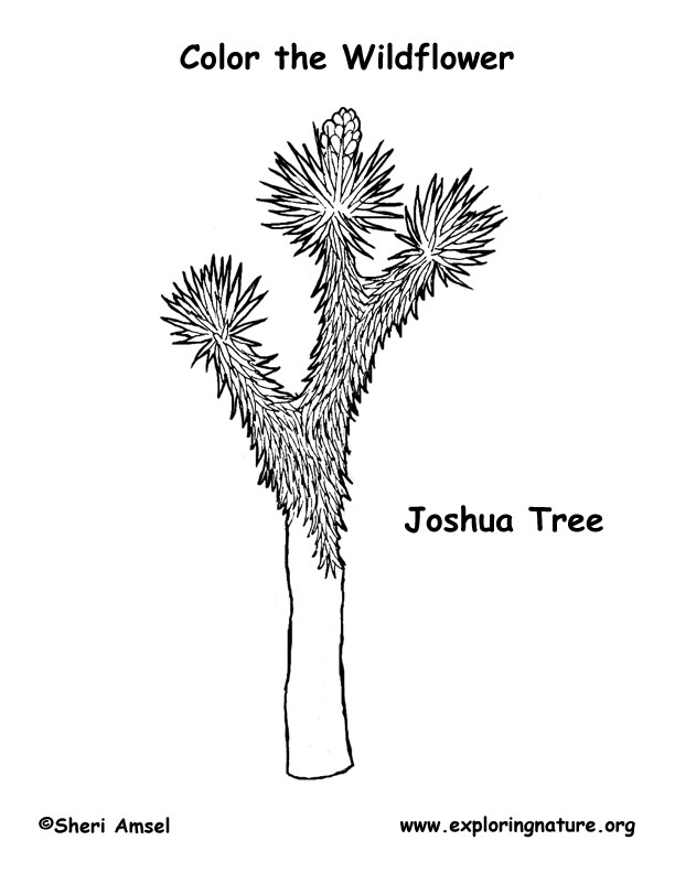 Joshua Tree Coloring Page