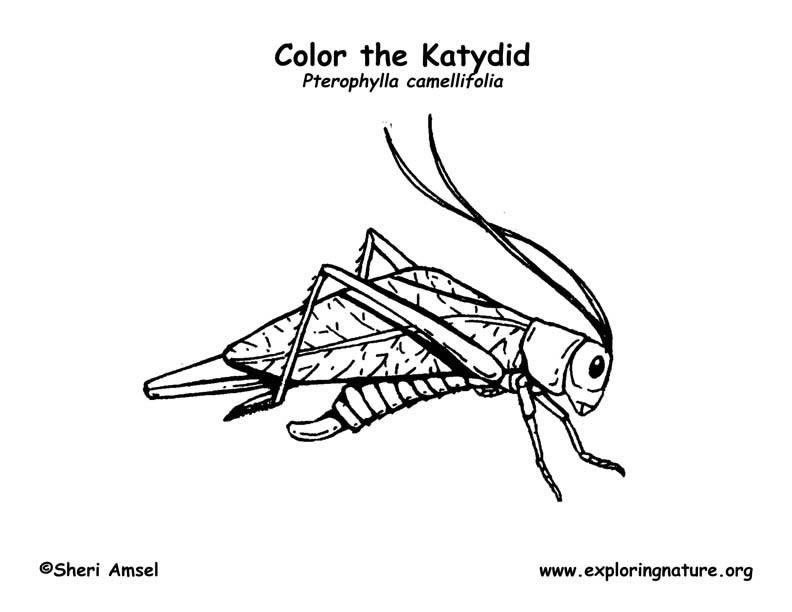 Katydid Coloring Page