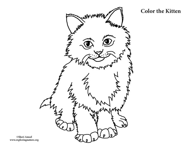 Kitten (Fluffy) Coloring Page