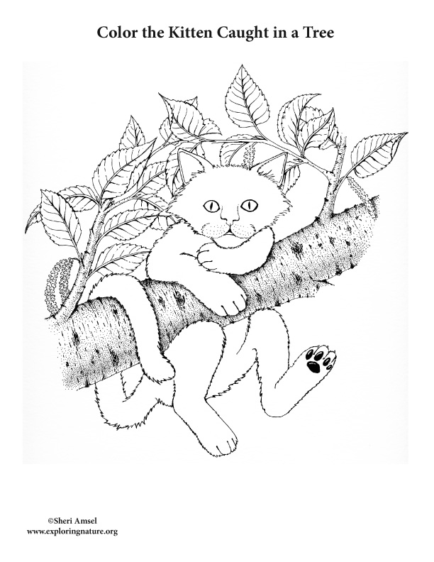 Kitten Caught in a Tree Coloring Page