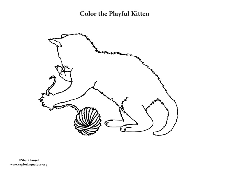 Kitten Playing with Yarn Coloring Page