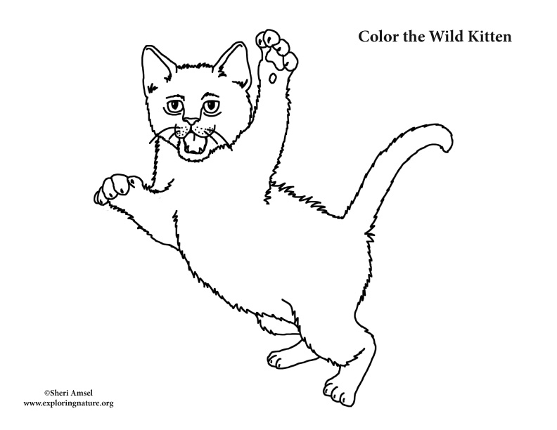 Kitten Leaping Coloring Page