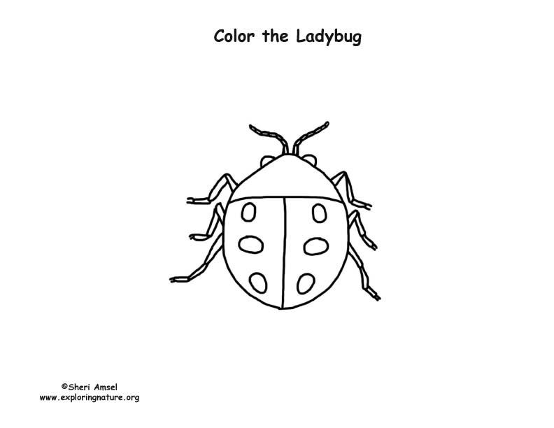 Ladybug 2 Coloring Page