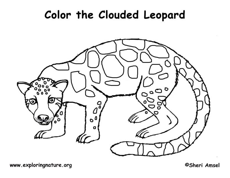 Leopard (Clouded) Coloring Page
