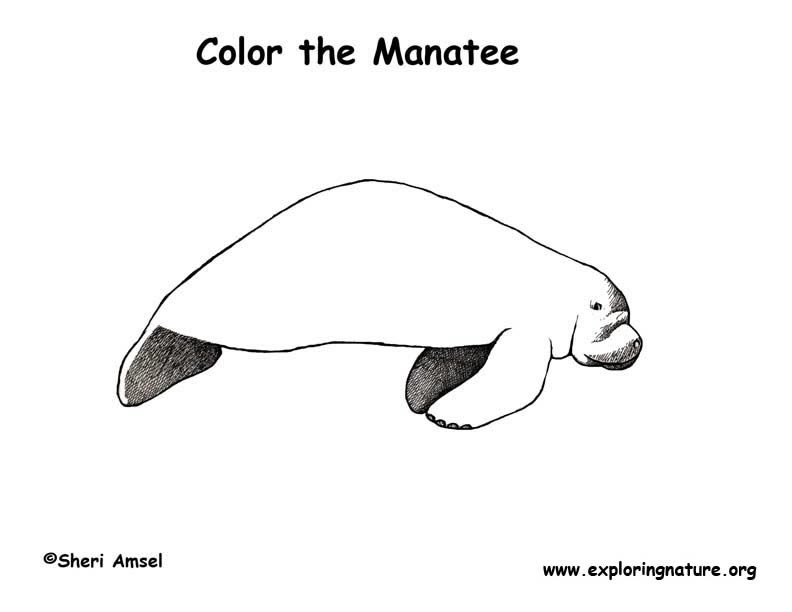 Manatee Coloring Page