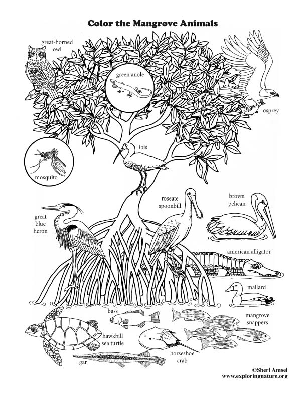 Mangrove Animals Coloring Page