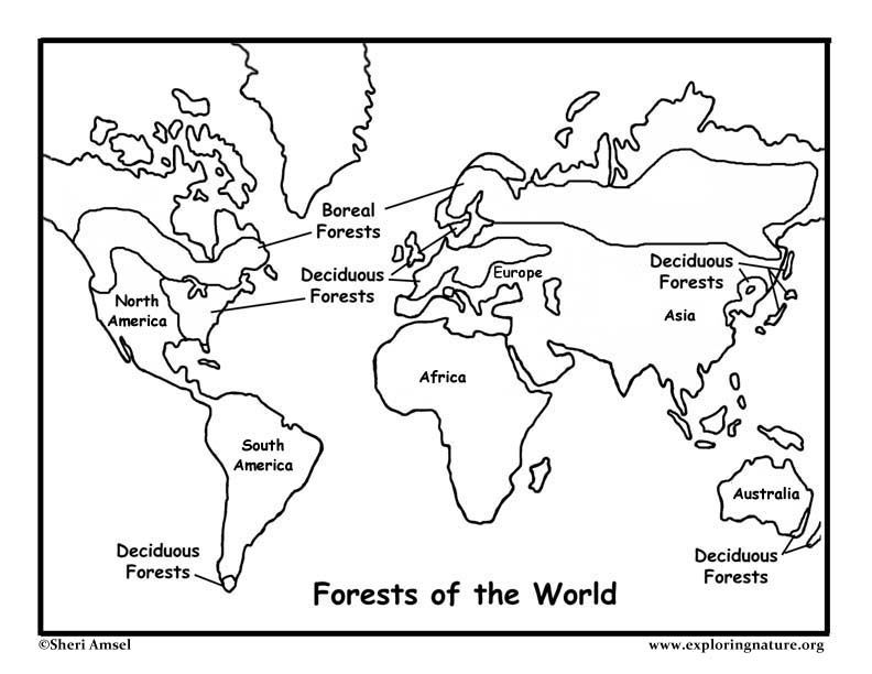 Forests of the World Coloring Page