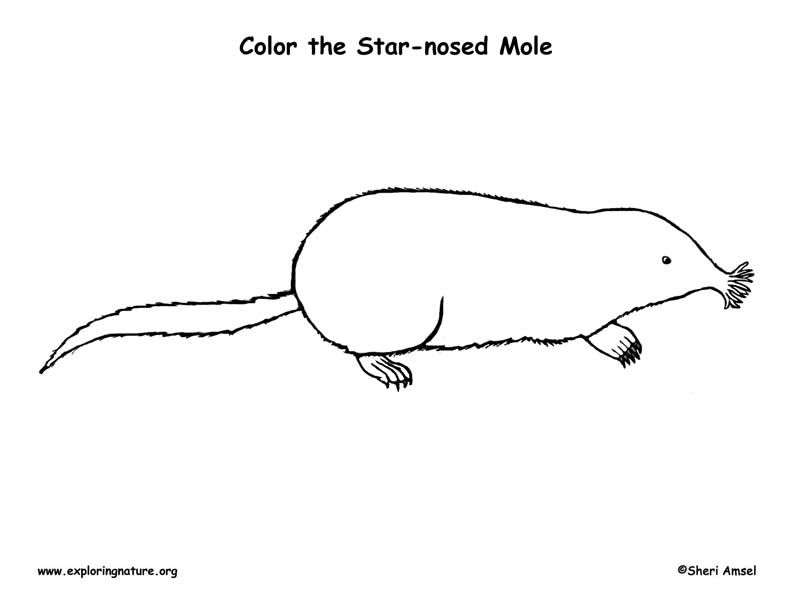 Mole‬ (Star-nosed) Coloring Page