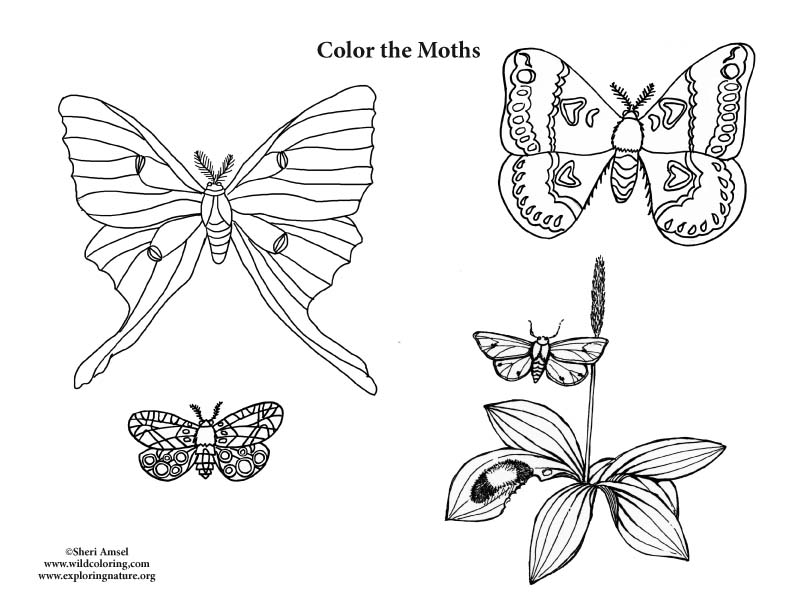 Moths Coloring Page