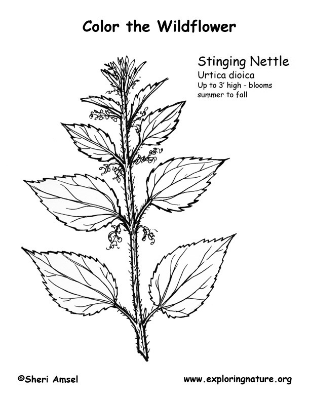 Nettles (Stinging) Coloring Page