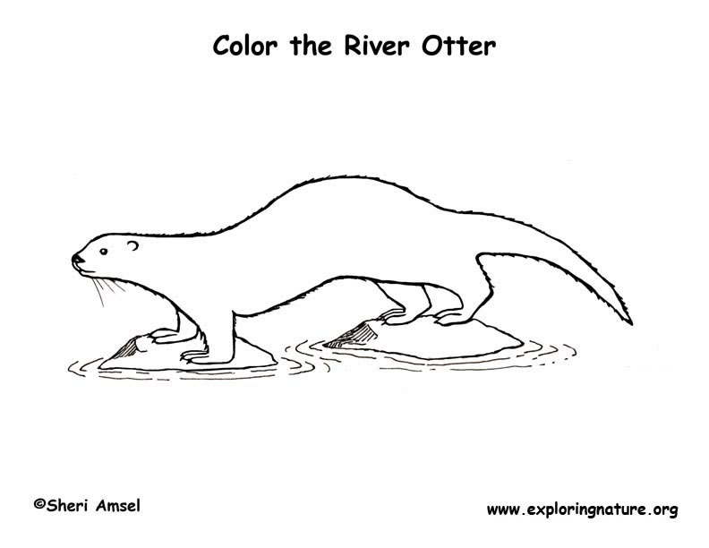 Otter (River) Coloring Page