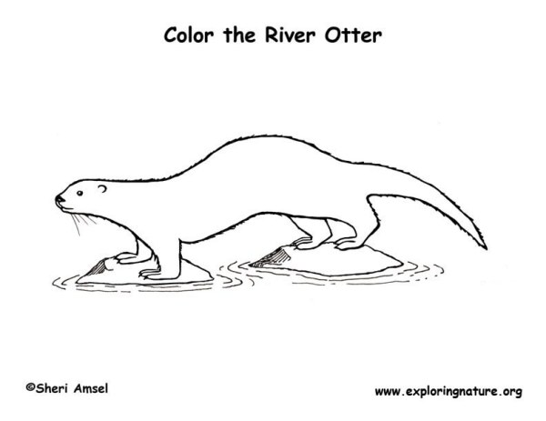 otter coloring page # 67