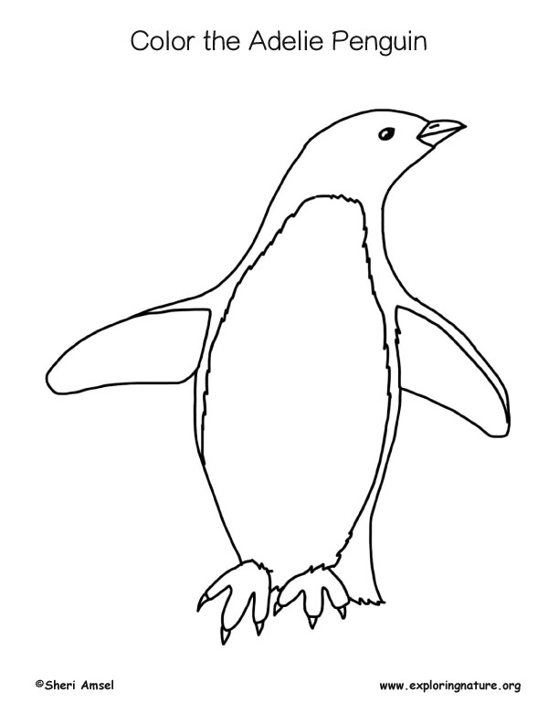 Penguin (Adelie) Coloring Page