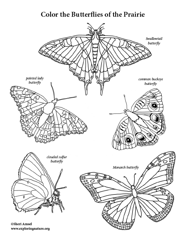 Butterflies of the Prairie Coloring Page