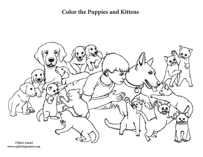 Puppies and Kittens Coloring Page