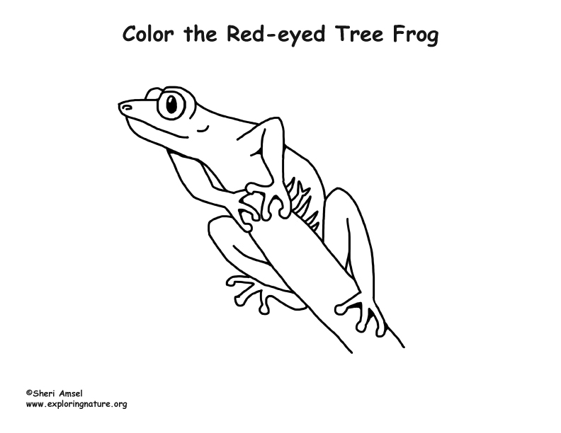 Red-Eyed Tree Frog Coloring Page