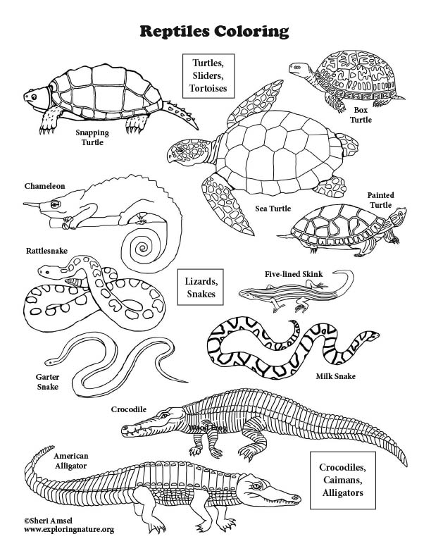 Reptiles of North America Coloring Page