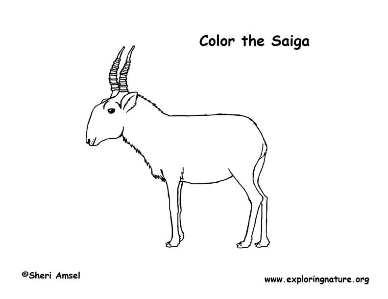 Antelope (Saiga) Coloring Page