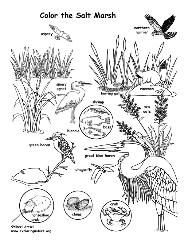 Salt Marsh Coloring Page