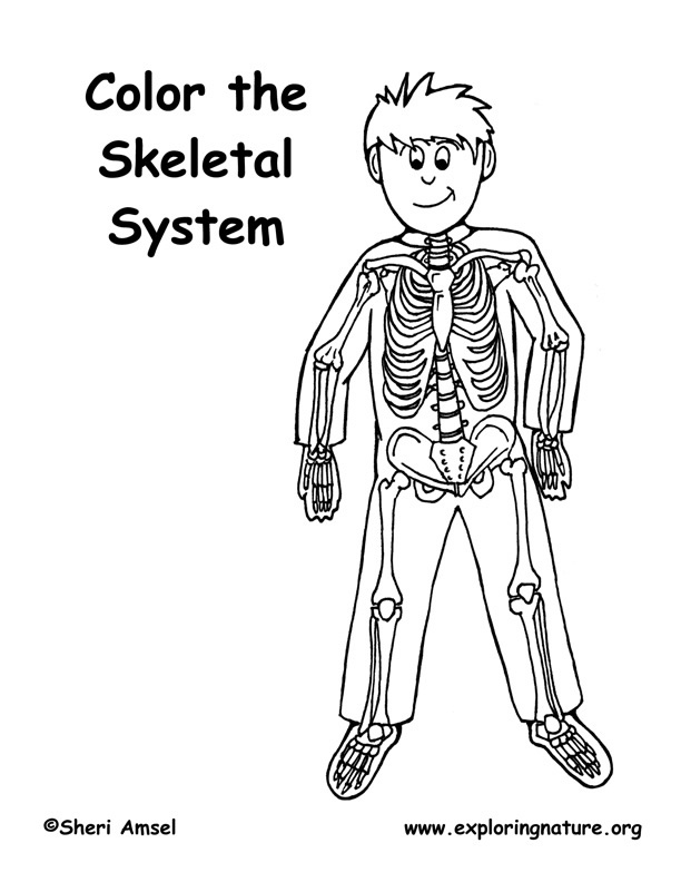 Skeleton Coloring Page (Elementary)