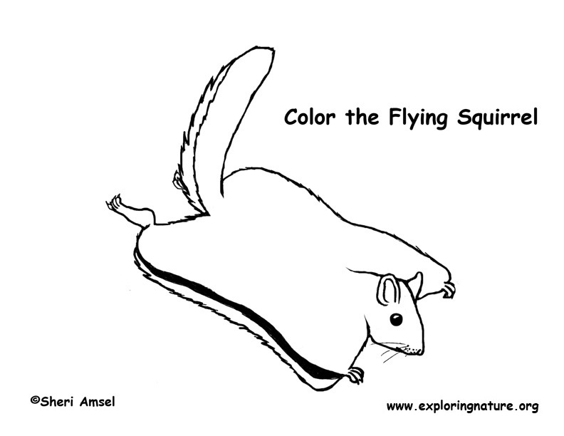 Squirrel (Flying) Coloring Page