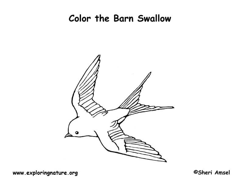 Swallow (Barn) Coloring Page