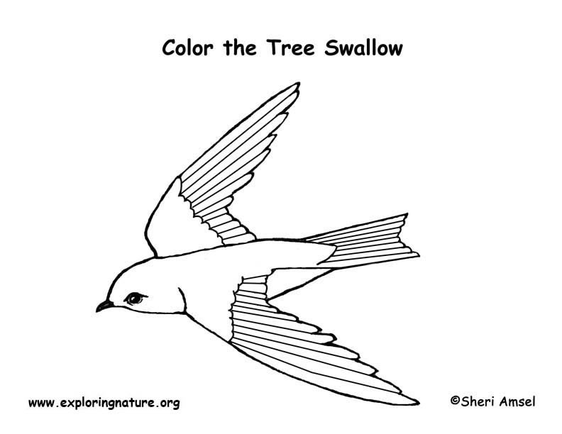 Swallow (Tree) Coloring Page