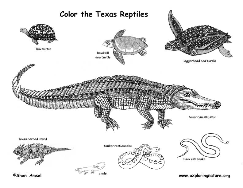 Texas Reptiles Coloring Page