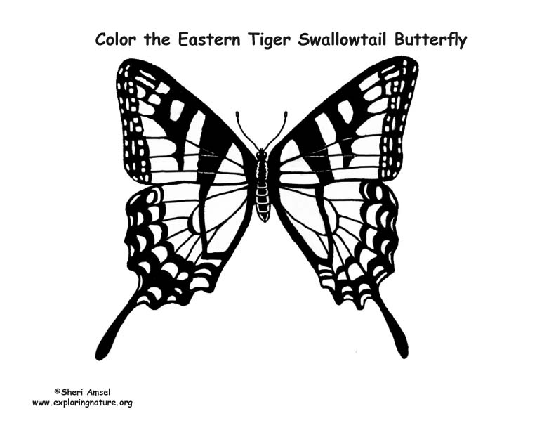 Butterfly (Eastern Tiger Swallowtail) Coloring Page