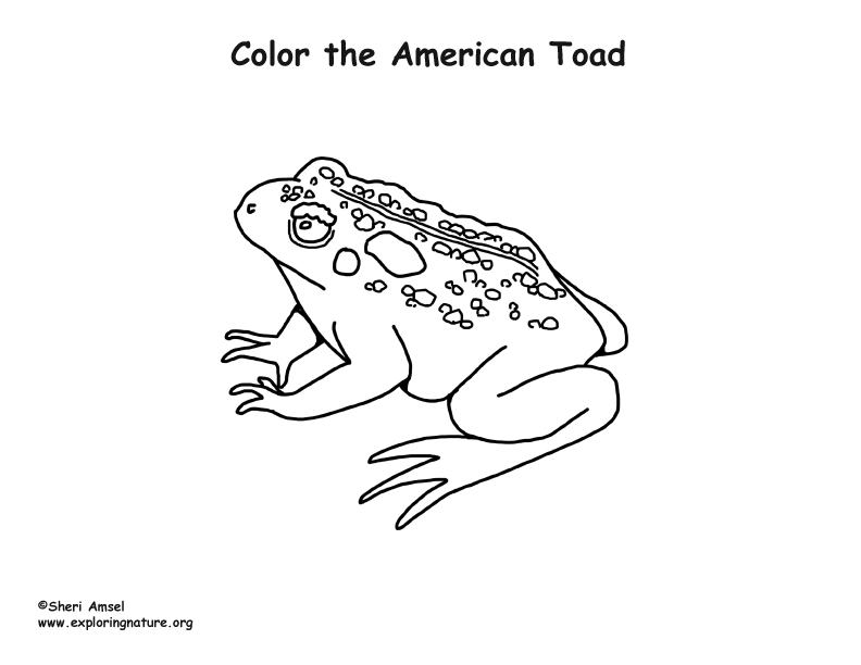 Toad American Coloring Page