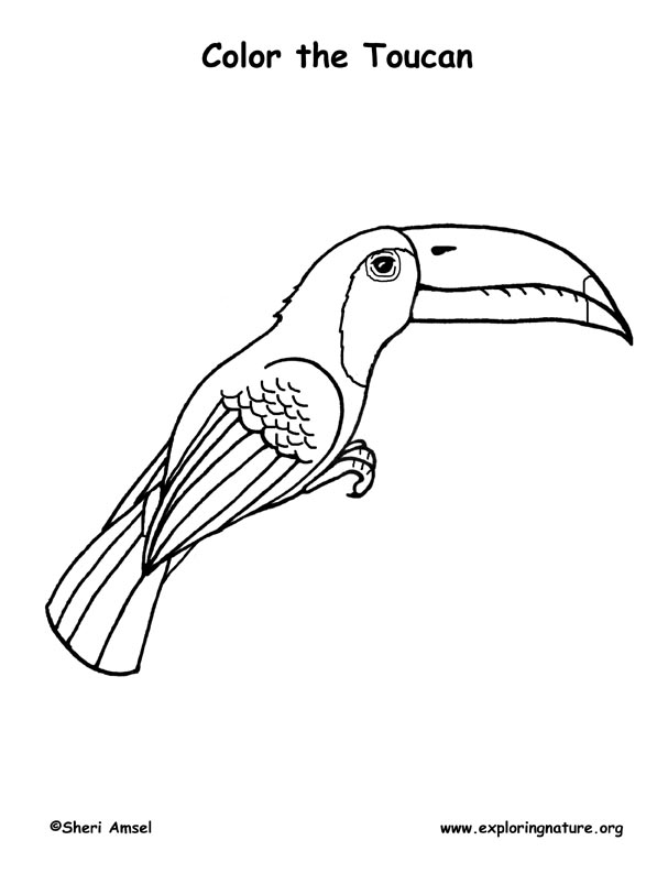Toucan (Keel-billed) Coloring Page