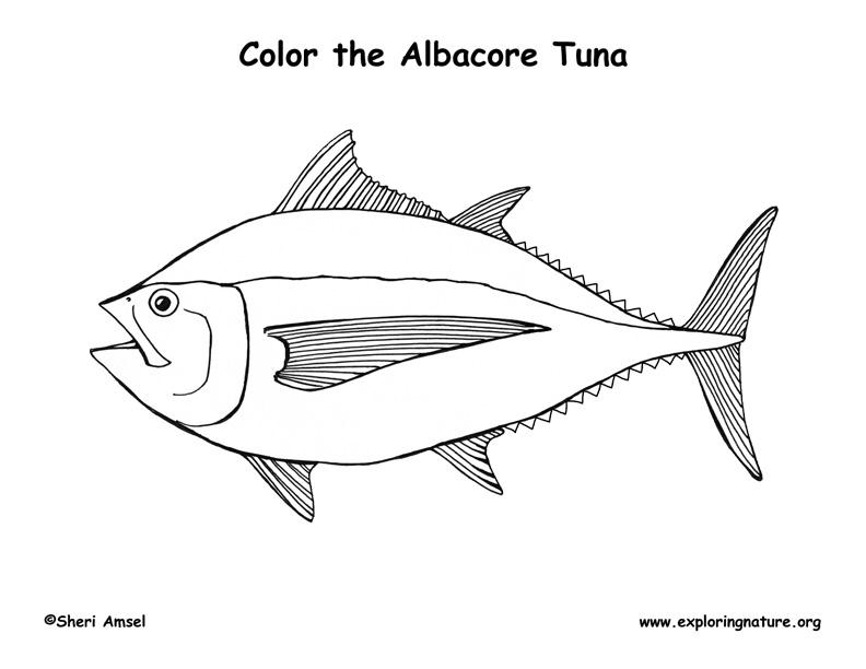 Tuna (Albacore) Coloring Page
