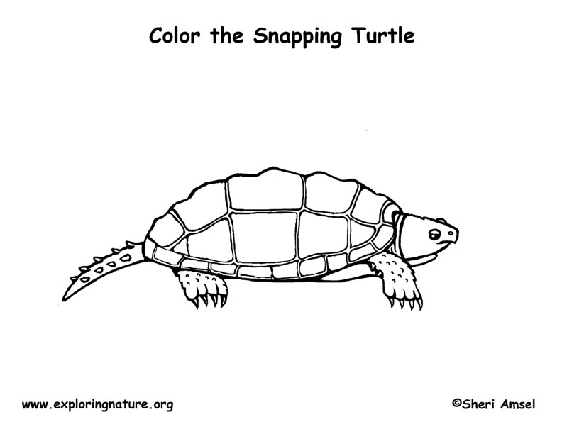 Turtle (Snapping) Coloring Page