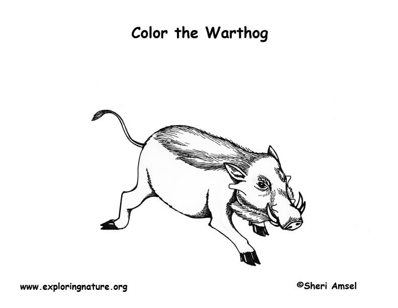 Warthog Coloring Page