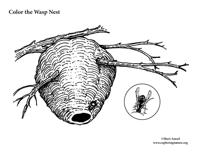 Paper Wasp and Nest Coloring Page