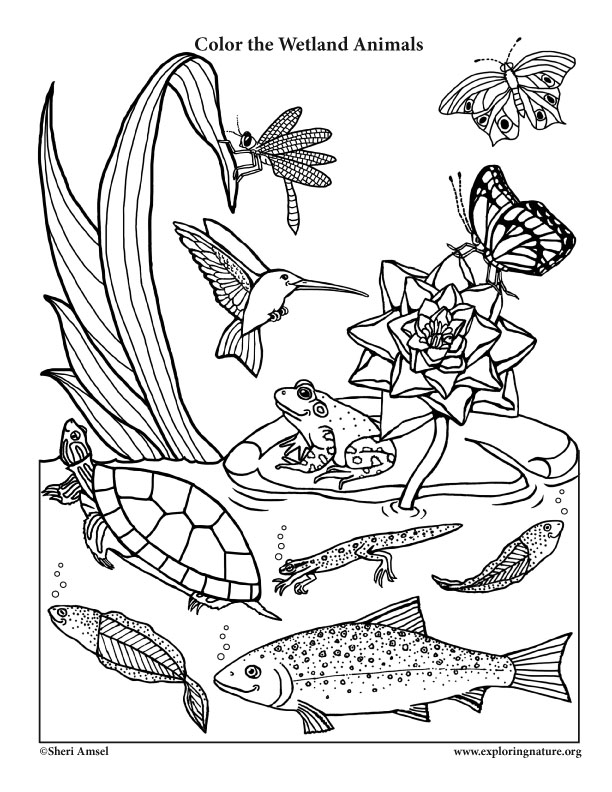 Color the Smiling Wetland Animals