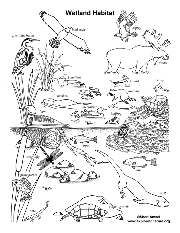 Wetland Habitat Coloring Page