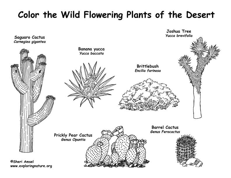 Desert Flowering Plants Coloring Page