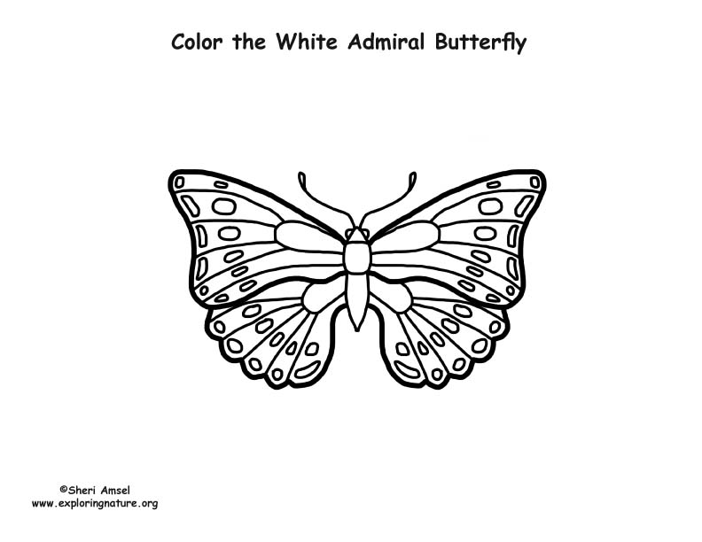 Butterfly (White Admiral) Coloring Page