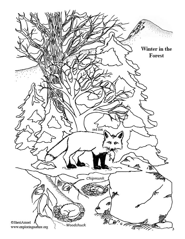 Forest in Winter Coloring Page
