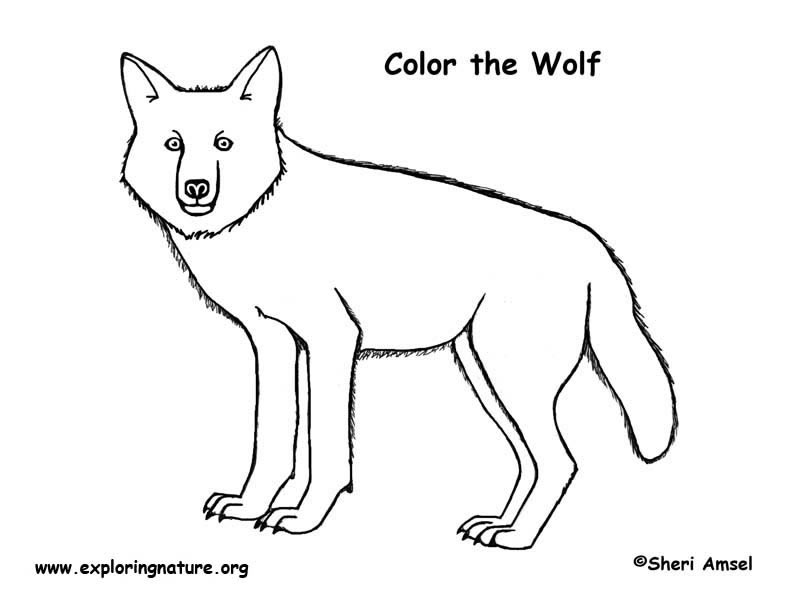 Wolf (Gray) Coloring Page