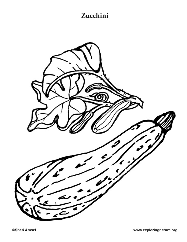 Garden Vegetables Coloring Pages (10)