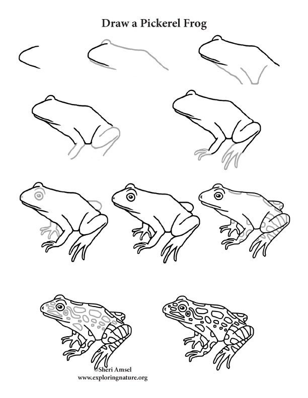 Frog (Pickerel) Drawing Lesson