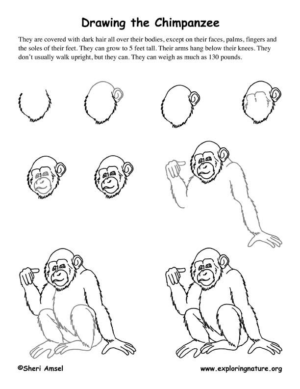 chimpanzee drawing lesson