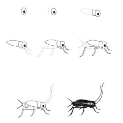 Cricket Life Cycle Diagram Radio Wire Drawings Of Insects Cycles Pictures To Pin On Pinterest - Pinsdaddy