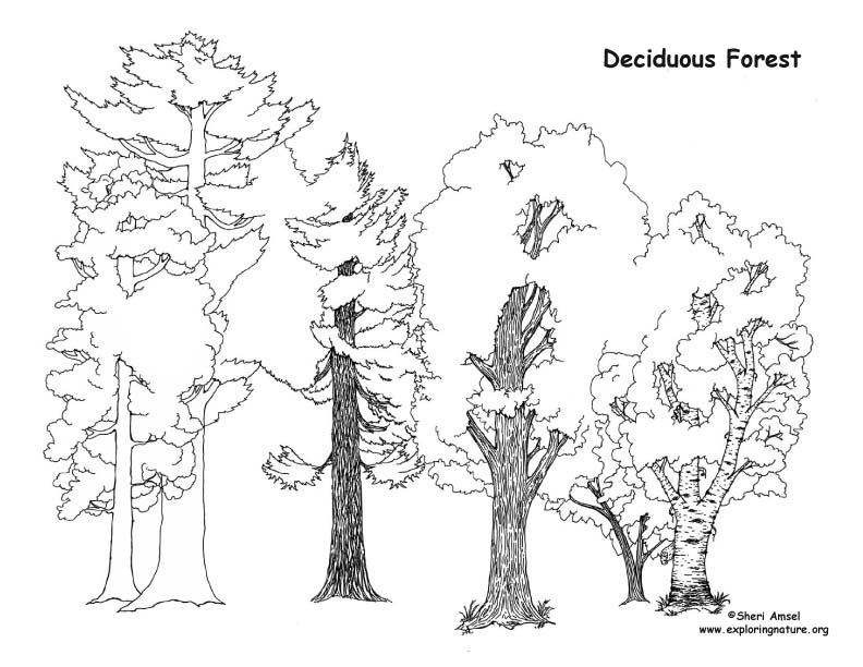 Draw a Deciduous Forest