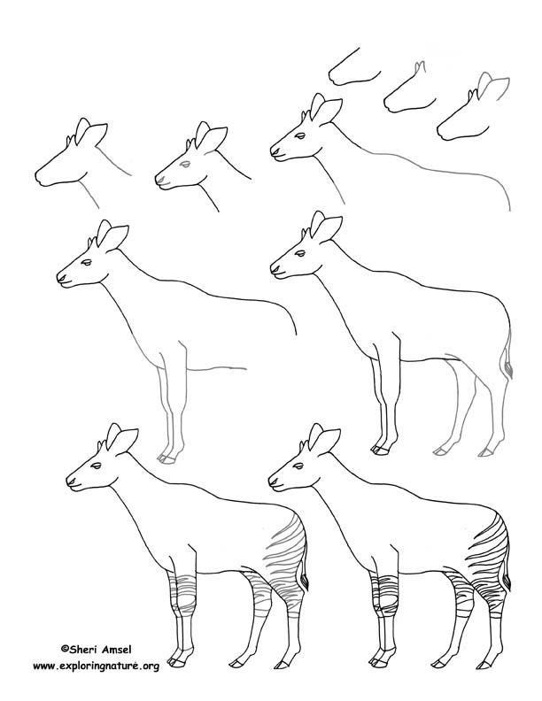 Okapi Drawing Lesson
