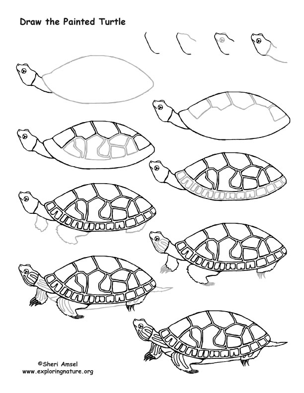 Turtle (Painted) Drawing Lesson